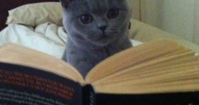 Not a Mockingbird Killing Manual?!?! - Cat humor