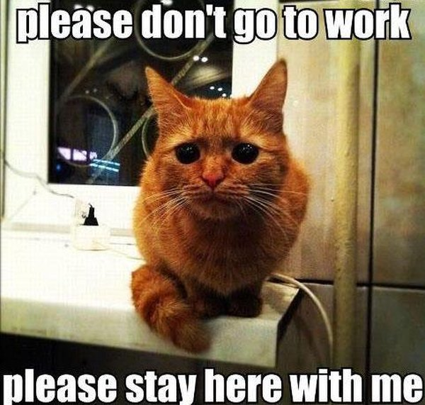 Please Don't Go To Work -Cat humor