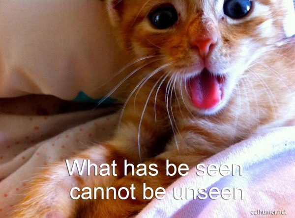 What Has Been Seen Cannot Be Unseen - Cat humor