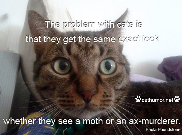 The Problem With Cats - Cat humor