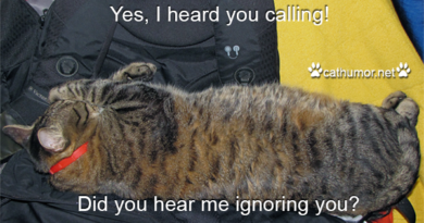 Yes I Heard You Calling - Cat Humor