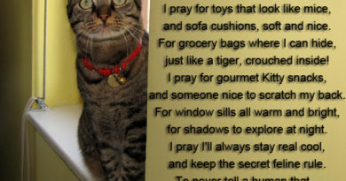 Cat Prayer - Cat humor