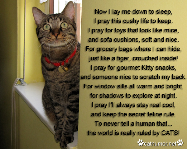 Cat Prayer - Cat humor