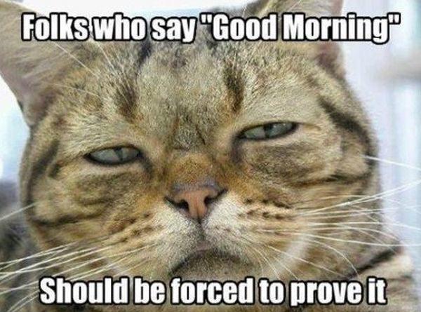 Not A Morning Cat - Cat humor