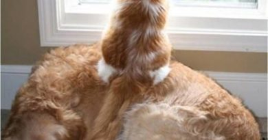 Finally - Cat humor