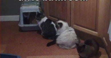 Girls Bathroom - Cat humor