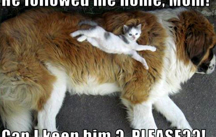 He Followed Me Home Mom - Cat humor
