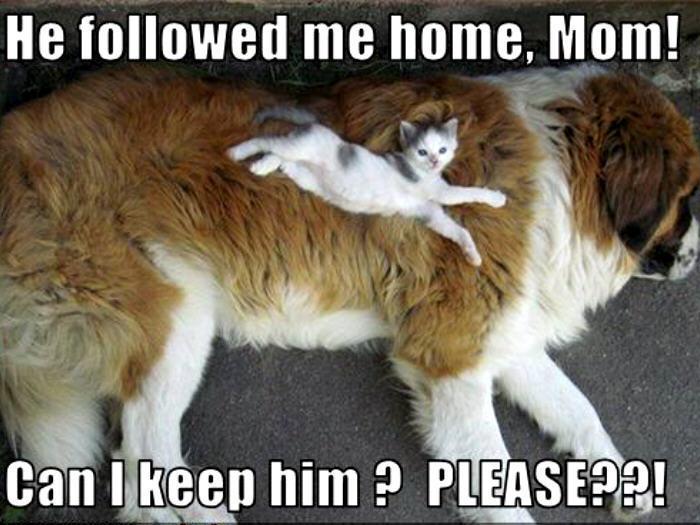 He Followed Me Home Mom - Cat humor