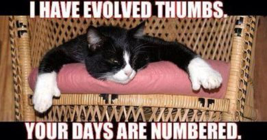 I Have Evolved Thumbs - Cat humor