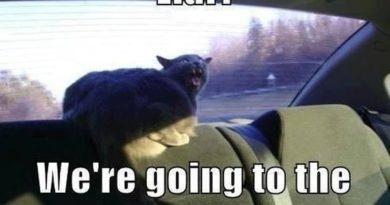 Liar! - Cat humor