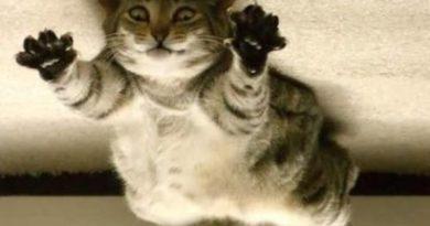 Spider Cat - Cat humor