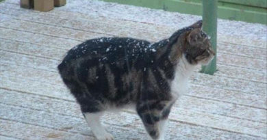Any Colder And My Tail Will... - Cat humor