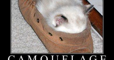 Camouflage - Cat humor