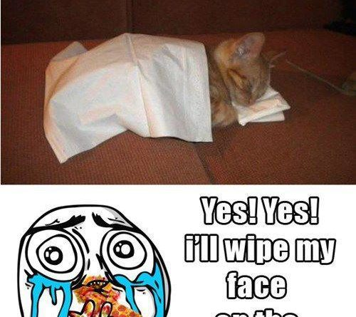Can I Has Your Napkinz? - Cat humor