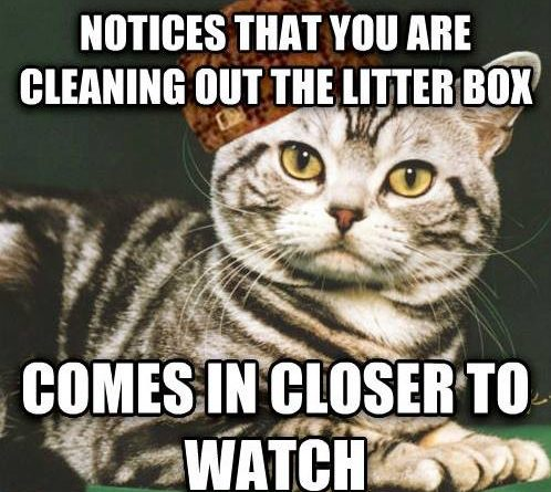 how to clean cat litter box
