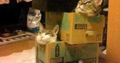Crazy Cat Lady Jenga - Cat humor