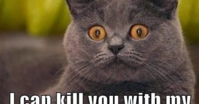 Dangerous Cat Is Dangerous - Cat humor