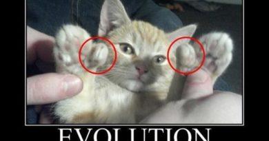Evolution - Cat humor