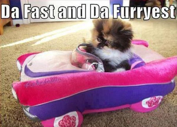 Da Fast And Da Furryest - Cat humor