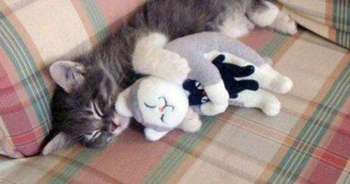 Inception - Cat humor