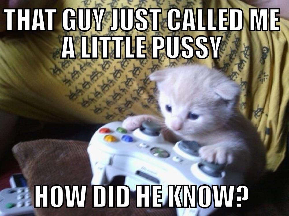 Gamer Kitty - Cat humor