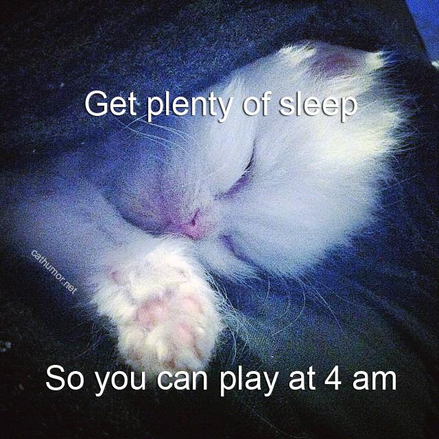 Get Plenty Of Sleep - Cat humor