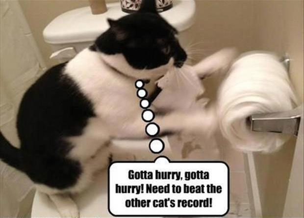 Gotta Hurry - Cat humor