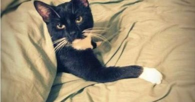 I Don't Always Get Under The Covers - Cat humor