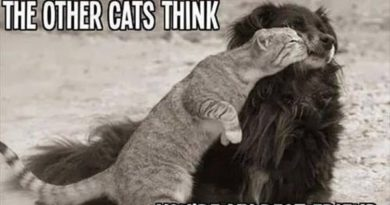 I Don't Care What The Other Cats Think - Cat humor