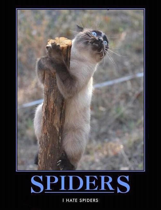 Spiders - Cat humor