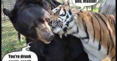 I Love You Maaan - Cat humor