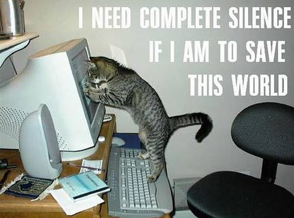I Need Complete Silence - Cat humor