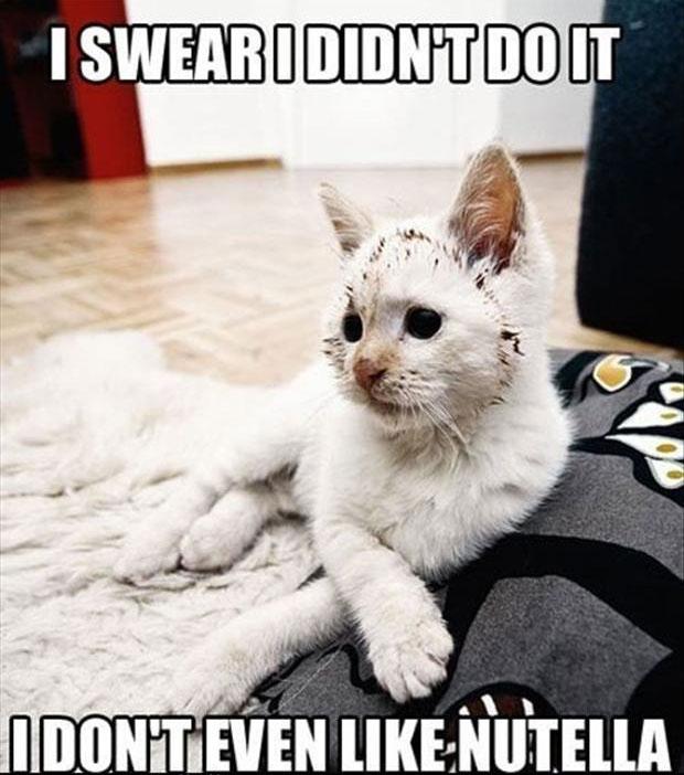 cat-humor-i-swear-i-didnt-do-it.jpg