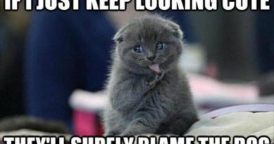 If I Just Keep Looking Cute - Cat humor