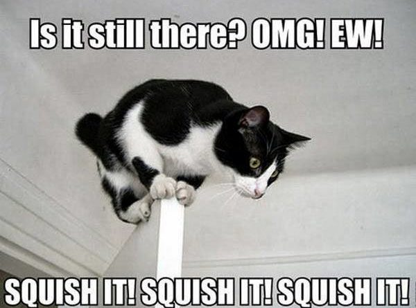 Is It Still There? - Cat humor