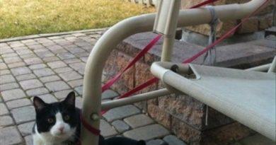 I've Made A Huge Mistake - Cat humor