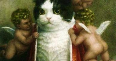 King Of The Internet - Cat humor