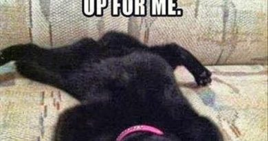 Laziest Cat Award - Cat humor
