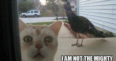 Let Me In, please - Cat humor