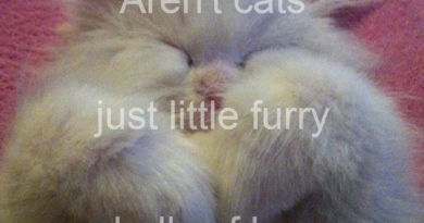 Little Furry Balls Of Love - Cat humor