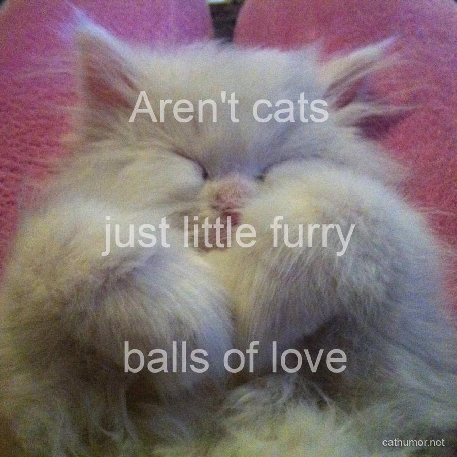 Little Furry Balls Of Love - Cat humor