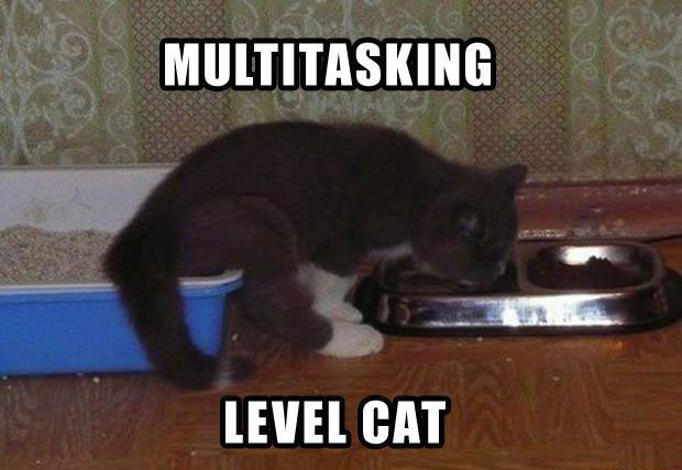 Multitasking - Cat humor