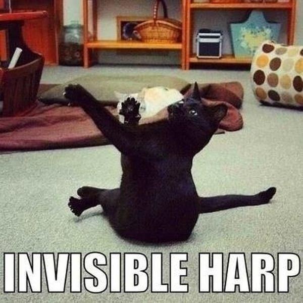 Invisible Harp - Cat humor