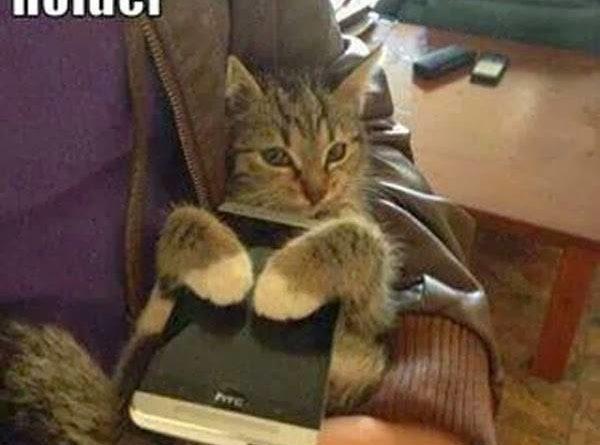 New Phone Holder - Cat humor