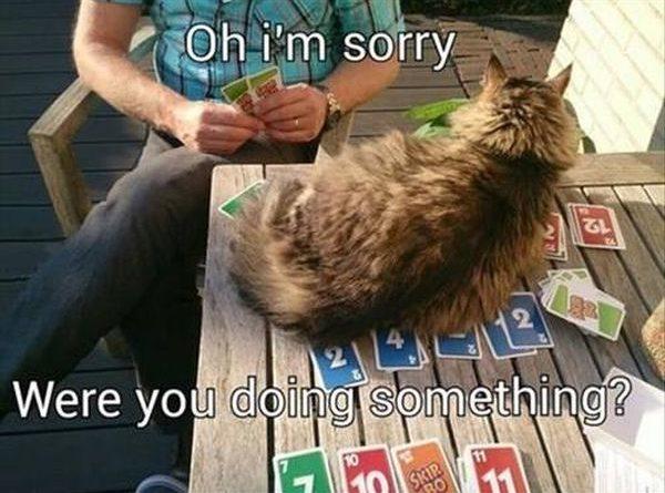 Oh! I'm Sorry! - Cat humor