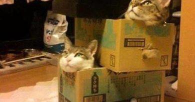 Cat Party - Cat humor