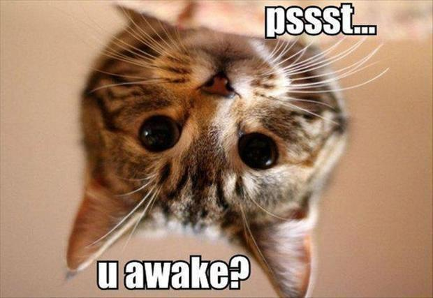 Morning Cat - Cat humor