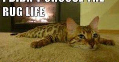 Rug Life - Cat humor