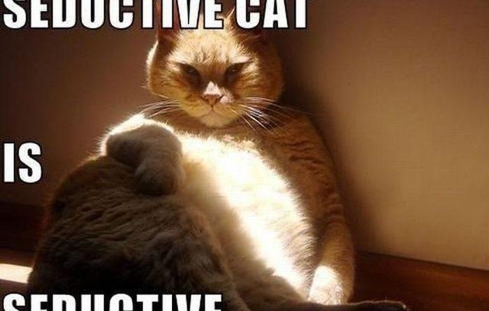 Seductive Cat - Cat humor