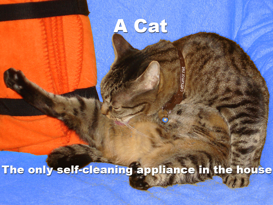 The Only Self-Cleaning Appliance In The House - Cat humor